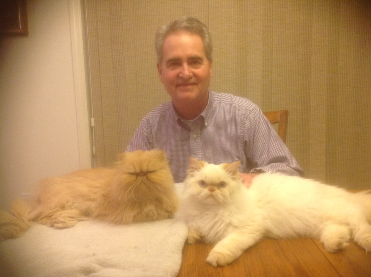 Mark Caravaty and his cats